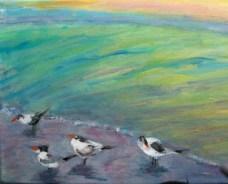 San. birds