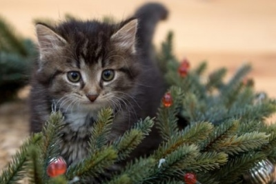 Why Did My Cat Pee on the Christmas Tree?