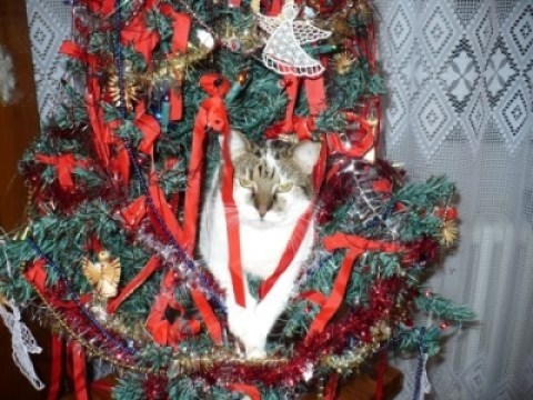 Help! My Cat is Knocking Over the Christmas Tree