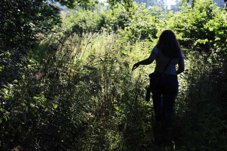 Dr Elaine Massung exploring an overgrown pathway in Wiltshire.