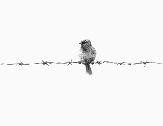 Bird on a Wire main