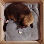Blue - Cat in a box.