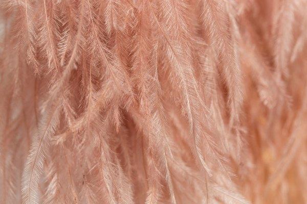 Blush Ostrich Feathers close up.