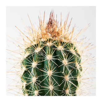 CACTACEAE £4.50 for 3