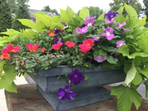 Photo of flowers in planter
