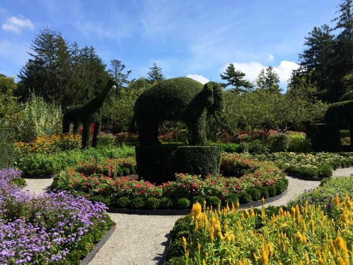 Elephant Topiary Photo