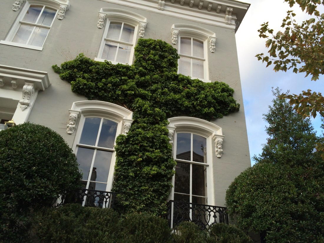 Photo of Ivy on House