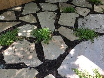 Photo of stone patio with groundcover