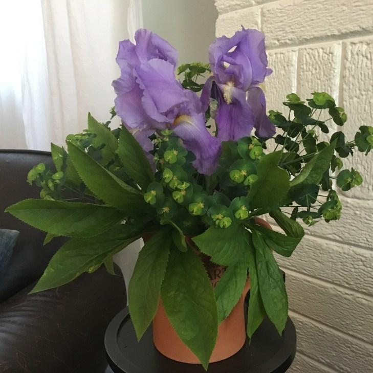 Photo of Iris bouquet