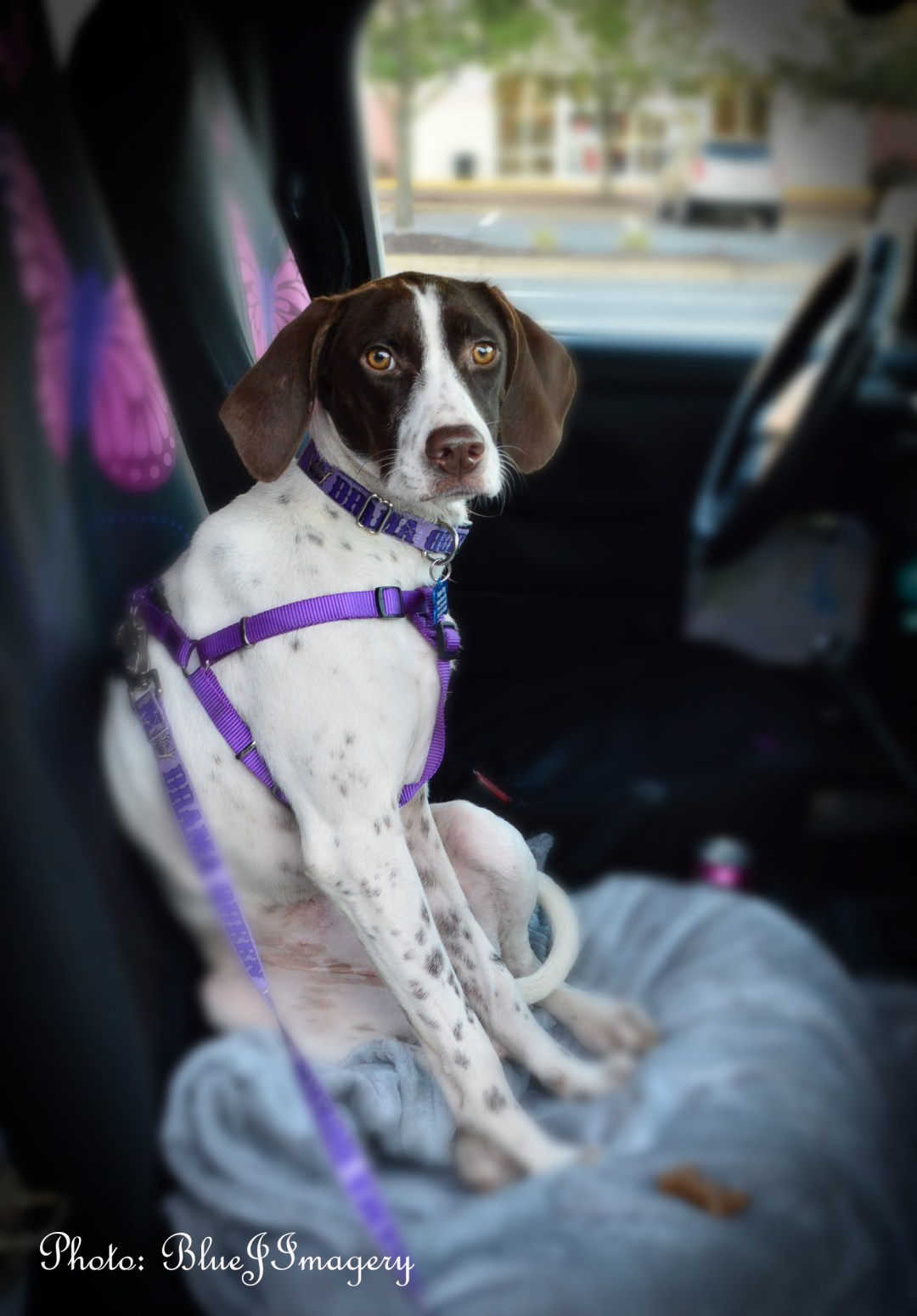 danica-front-seat