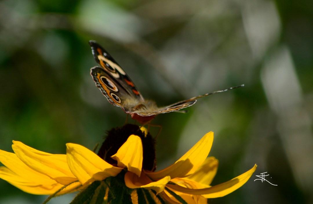 Moth Fuzz1