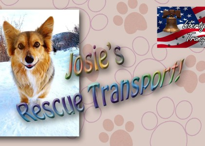 Animal Rescue: Video-Photo Story (Josie)