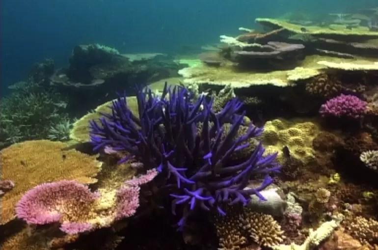 Wielka Rafa Koralowa w Australii 3