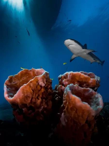 Podwodny Fotograf Roku 2016
