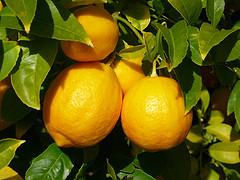 Lemons by Alasam
