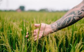 Tetovirana roka med riževim klasjem (stroški potovanja za Bali naslovna fotka)