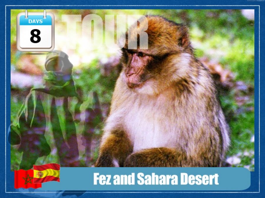 Fez and Sahara Desert