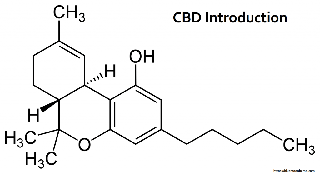Everything You Wanted to Know About CBD and Were Afraid to Ask