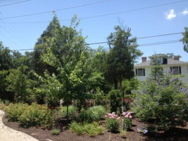 renovation-planting