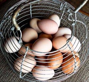 eggsfeb15