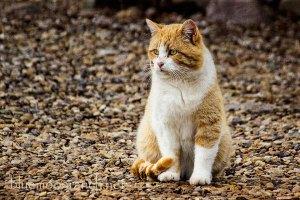 catseries2