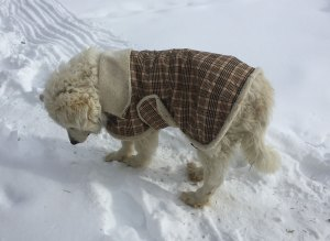 abbys.coat