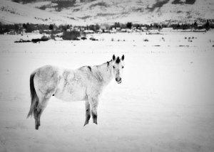 january-horse