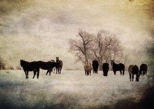 snowhorse2