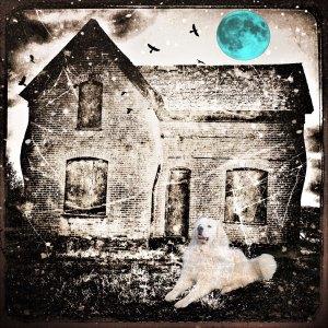 blue-moon-dog
