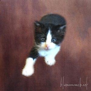 girl-kitty