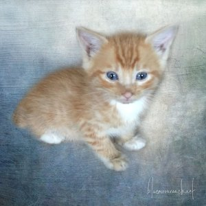 kitty-boy