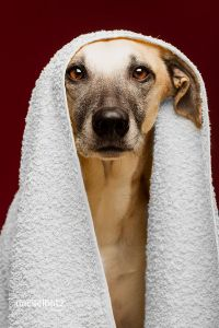 Towel Day by Elke Vogelsang