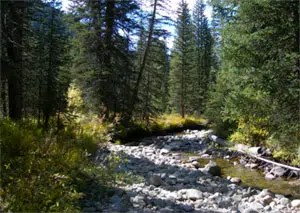 Ecological & Environmental Services