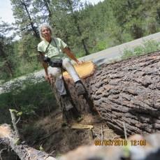Karen with large stump and log