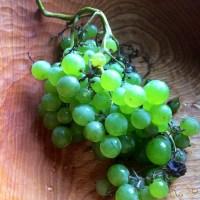 Chardonnay Grape Pie