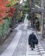 I just love Kyoto.