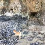 気晴らしに! 愛犬 と 海で散歩!!