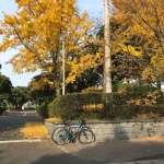 紅葉!気晴らしに!ロードバイクで  サイクリング !
