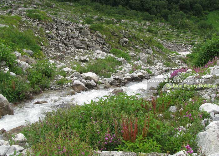 A beautiful stream on our trek.