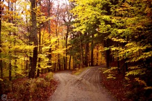 Two roads diverged in a yellow wood - one wide and one narrow; our choice.