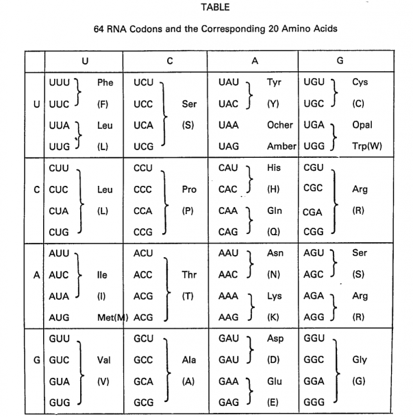 The letters for the 'alphabet' of DNA language.  Triplet nucleotides sit side by side.  Each triplet is interpreted by the cell as the code for an amino acid.  Each amino acid has more than one code.