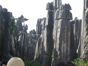 Yunnan Fossil Forest Frozen in Time