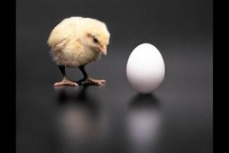 chicken-or-egg1