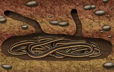 Hibernating den of snakes.
