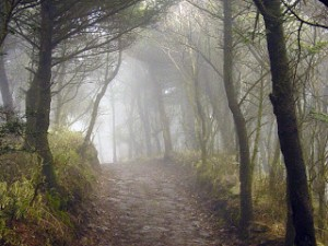 Path_Through_the_Mist