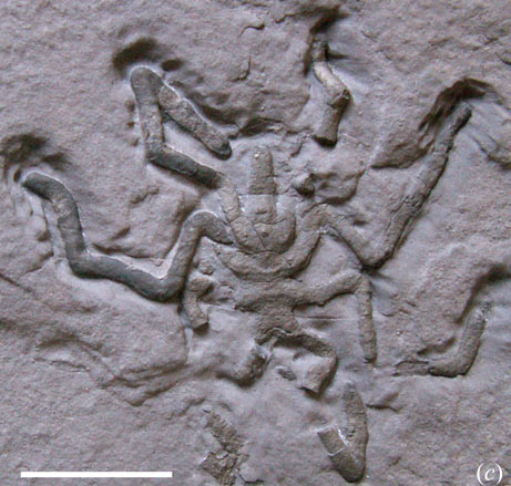 070816-fossil-spider_big - Copy
