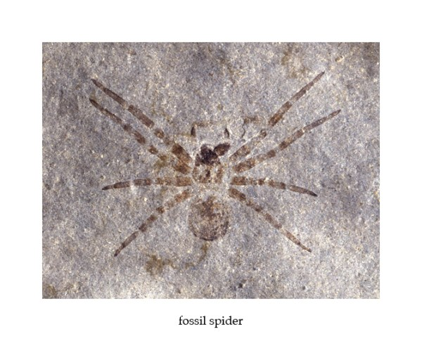 Spider - Copy - Copy
