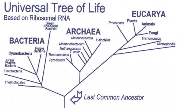 WHY IS THE ANCESTRAL FORMS ALWAYS MISSING? WHY ARE THERE NO INTERMEDIATE LIFE FORMS?