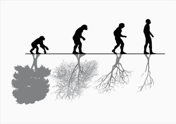 evolution (1)