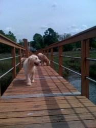 Rosco Smiling at the lake